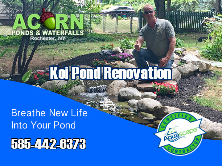 Pond Renovation & Leak Detection (Repair) Services 585-442-6373